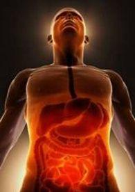 El cerebro digestivo